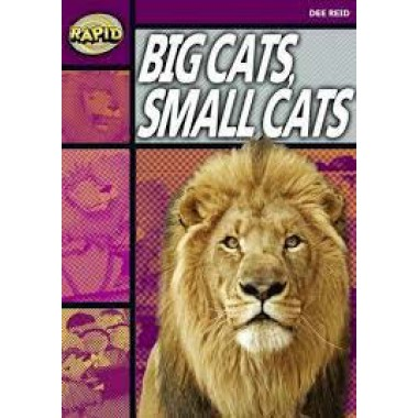 RAPID STAGE 1 SET A: BIG CATS, SMA
